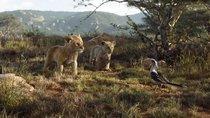 """""""Der König der Löwen""""-Kritik: 5 Gründe, warum sich ein Kinobesuch lohnt"""