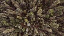 Klimaneutrales Streaming: Jetzt Zattoo testen und einen Baum pflanzen