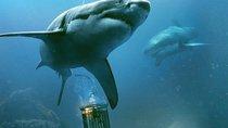 Ab jetzt neu bei Amazon Prime: Doppelter Hai-Horror gratis