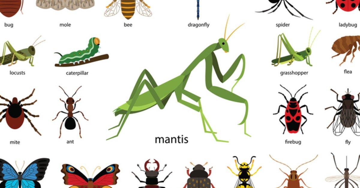 käfer identifizieren