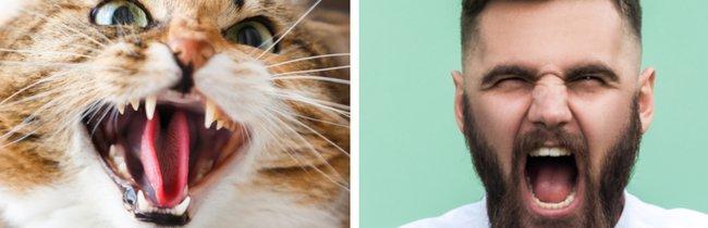 21 GIFs, die euch beweisen, wie hinterhältig Katzen WIRKLICH sind
