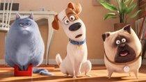 """""""Pets 3"""": Wird es eine Fortsetzung geben?"""